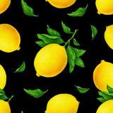 Ilustracja piękne żółte cytryn owoc na gałąź z zielenią opuszcza na czarnym tle Akwarela rysunku wzór ilustracja wektor