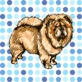 Ilustracja psi traken Chow Chow Obrazy Stock