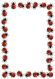 Ladybirds rama Obraz Stock