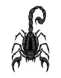 Ilustracja skorpion Fotografia Royalty Free