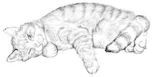 Ilustracja sypialny kot, czarny i biały rysunek Zdjęcie Stock
