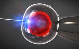 Ilustracja sztuczny zapłodnienie Vitro fertiliza lub Obraz Royalty Free