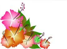 ilustracja tropikalna Fotografia Royalty Free