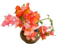 Ilustracja wyżliny w ceramicznej wazie Fotografii manipulatio Zdjęcie Royalty Free