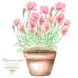 Ilustracja z akwareli menchiami kwitnie w garnku Obraz Stock