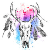 Ilustracja z jelenim scull i piórkami Fotografia Stock