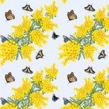 Ilustracja z mimozą i motylami w wzorze royalty ilustracja