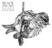 Ilustracja z ptasią czeczotką rysującą ręką z czarnym atramentem Obraz Stock