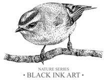 Ilustracja z ptasi goldcrest rysującym ręką z czarnym atramentem Zdjęcie Royalty Free