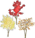 Ilustracja z trzy jaskrawymi spadków drzewami odizolowywającymi na bielu Obrazy Stock