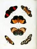 Ilustracje insekt royalty ilustracja