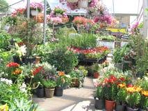 ilustracji sklepu smellcomp kwiat Zdjęcia Stock