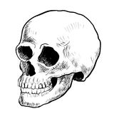 Ilustracyjna czaszka Kreśli styl - Wręcza patroszonego wektor Fotografia Royalty Free