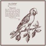 Ilustracyjna falista papuga na śniadanio-lunch fo zwierzęcia domowego sklepie Obraz Stock