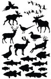 ilustracyjna przyroda Obrazy Stock