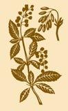 ilustracyjna roślina Zdjęcie Royalty Free