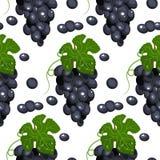 Ilustracyjna winorośl Bezszwowy tło Odosobniony biały tło ilustracji