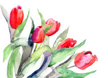 Ilustracyjni Tulipanów stylizowani kwiaty Zdjęcia Royalty Free