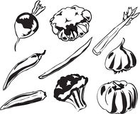 ilustracyjni warzywa Obrazy Royalty Free