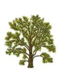 ilustracyjny drzewo Obrazy Royalty Free