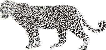 ilustracyjny lampart Obrazy Stock