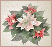 Ilustracyjny poinsecja kwiat (bożego narodzenia sta Obrazy Stock