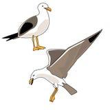 ilustracyjny seagull Zdjęcie Royalty Free