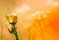 ilustracyjny springflower Fotografia Royalty Free