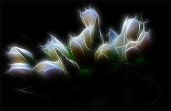 ilustracyjny tulipan Obrazy Royalty Free