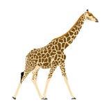 Ilustracyjny Wilde Tiere - żyrafa 2 Fotografia Stock