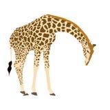 Ilustracyjny Wilde Tiere - żyrafa 2 Zdjęcie Stock