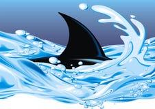 Tiburón en agua Fotos de archivo
