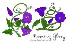 Ilustrador del vector de la flor colorida de la correhuela Fotos de archivo libres de regalías