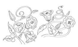 Ilustrador del vector de la flor de la correhuela Imágenes de archivo libres de regalías