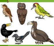 Ilustração ajustada dos desenhos animados dos pássaros Imagens de Stock