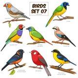 Ilustração colorida do vetor dos desenhos animados ajustados do pássaro Imagens de Stock Royalty Free