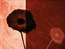 Ilustração da bela arte - flores no windowsill Fotografia de Stock Royalty Free