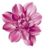 Ilustração da flor Foto de Stock