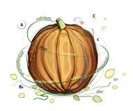 Ilustração das vitaminas da abóbora e das sementes Imagens de Stock Royalty Free