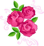 Ilustração de três rosas Fotos de Stock
