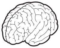 Ilustração de um cérebro Foto de Stock Royalty Free