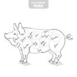 Ilustração desenhado à mão do vetor do porco Imagem de Stock Royalty Free
