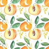 Ilustração do fruto do abricó da aquarela Fotos de Stock