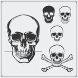 Ilustração do vetor dos crânios e do Jolly Roger Foto de Stock