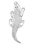 Ilustração isolada do crocodilo branco preto gráfico animal Imagem de Stock Royalty Free