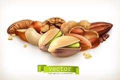 Ilustração Nuts do vetor Fotografia de Stock
