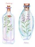 A ilustração romântica e as garrafas da aquarela do conto de fadas com flores e airela do salvia ramificam para dentro Fotos de Stock Royalty Free