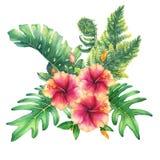 Ilustration av en bukett med denrosa färger hibiskusen blommar och tropiska växter vektor illustrationer