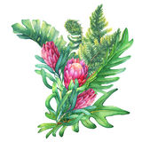 Ilustration of a bouquet with pink Protea flowers and tropical plants. Royalty Free Stock Photography
