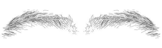 Ilustration del sopracciglio fotografie stock libere da diritti